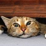Ett tyngande kattproblem