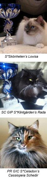 Framgångsrika klubbkatter på SK 2012