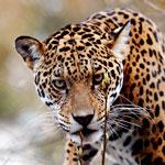 ettabild_zoo