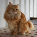 Katten Molly