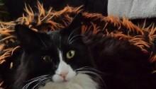 Månadens katt december