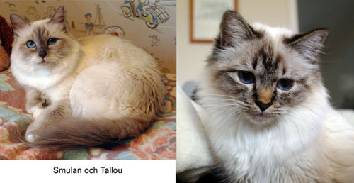 Smulan och Tallou