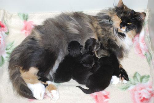 Bonnys nyfödda bebisar