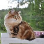 Sivert – Novemberkatt
